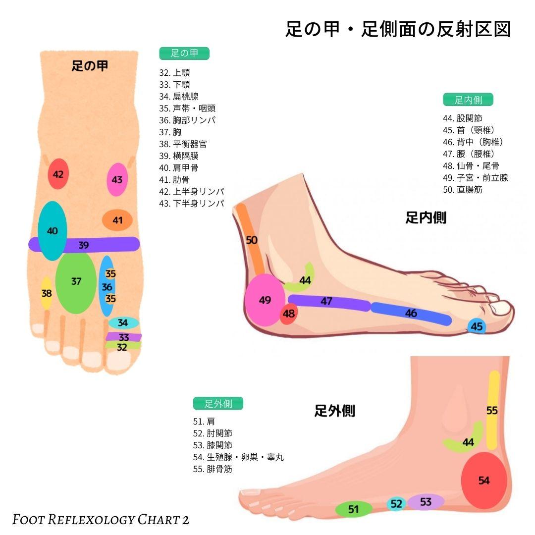 足つぼマップ 足ツボの図(足つぼ反射区表)