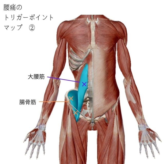 腰痛のトリガーポイントと原因となる筋肉②