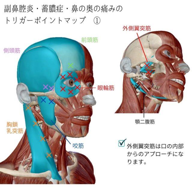 副鼻腔炎・蓄膿症・鼻の奥の痛みに効くツボ・トリガーポイントと慢性化・悪化の原因となっている筋肉①